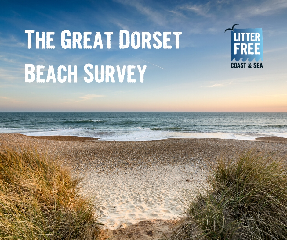 Dorset Beaches Survey